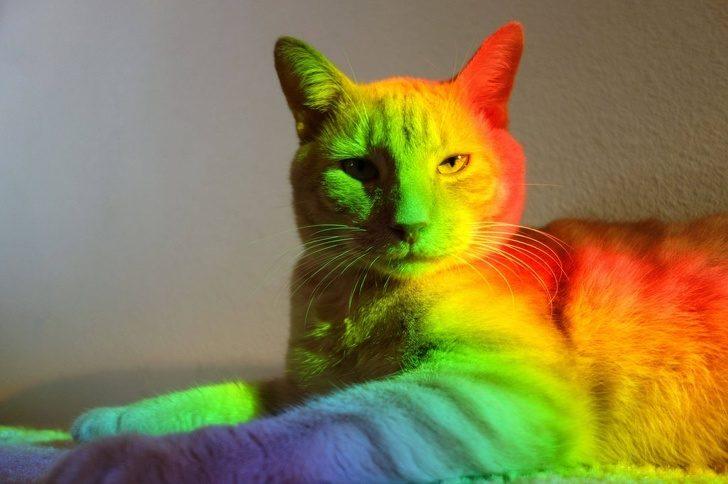 16張照片證明「你一輩子都搞不懂貓咪邏輯」 吸過一次貓額頭就回不去了!