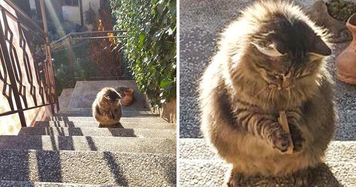 30張照片解釋「為什麼需要成為貓貓教信徒」 把壁紙上的魚當晚餐表情太銷魂XD