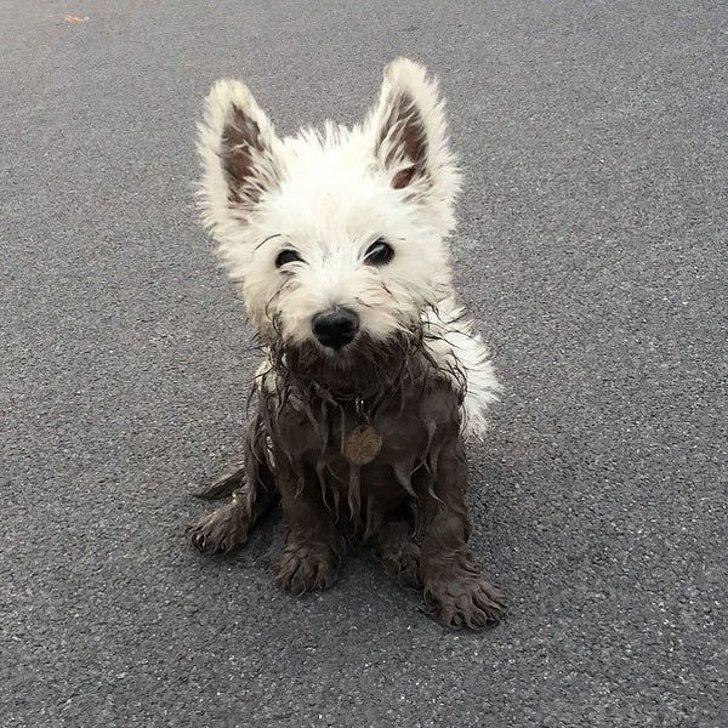11種「萌系犬種」的毛孩子小時候 現在看了長大可能變成最Q小壞蛋❤