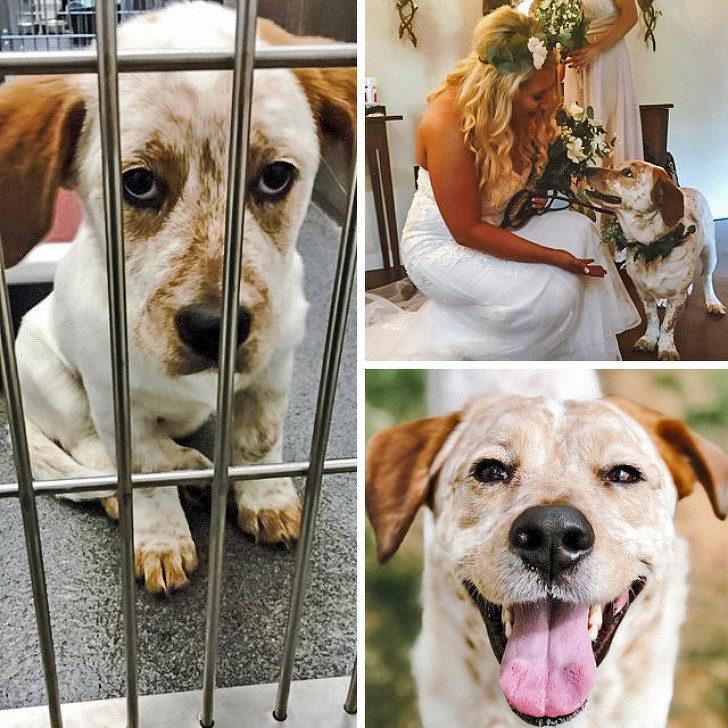 23隻「再次感受到家庭溫暖」的悲傷動物 才2天緊張的小眼神就充滿了愛意!