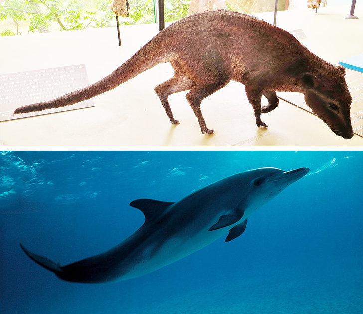 11種「偷偷在演化時整形」的動物 長頸鹿的現在vs.過去...根本兩碼子事情!