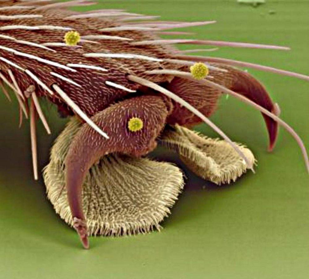 18張在顯微鏡下「看起來就像是外星來」的照片 草莓放大竟爬滿「6隻腳的生物」!