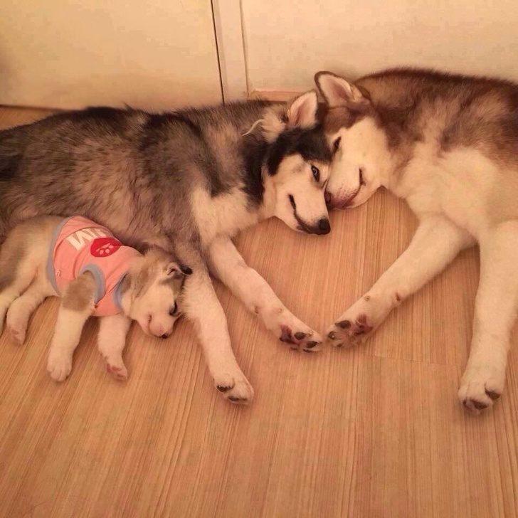 20張證明「別人家的狗狗絕對比你家那隻可愛」的照片 翹起小短腿繫安全帶的黃金寶寶❤