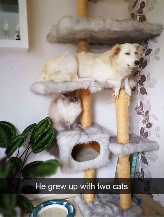 14個「在北極也能融化人心」的感動故事 他的貓咪離開了...一年後成為大樹繼續陪伴他!