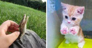 20張看完「讓你還有心情繼續加班」的療癒照 果然只剩下小動物可以滅掉絕望!