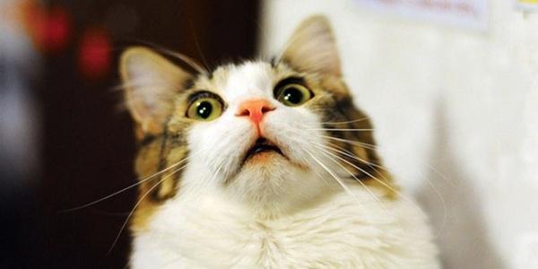 貓咪跳進「神秘召喚的渦輪」 鏟屎官想搭救最後1條手臂也跟著賠進去!