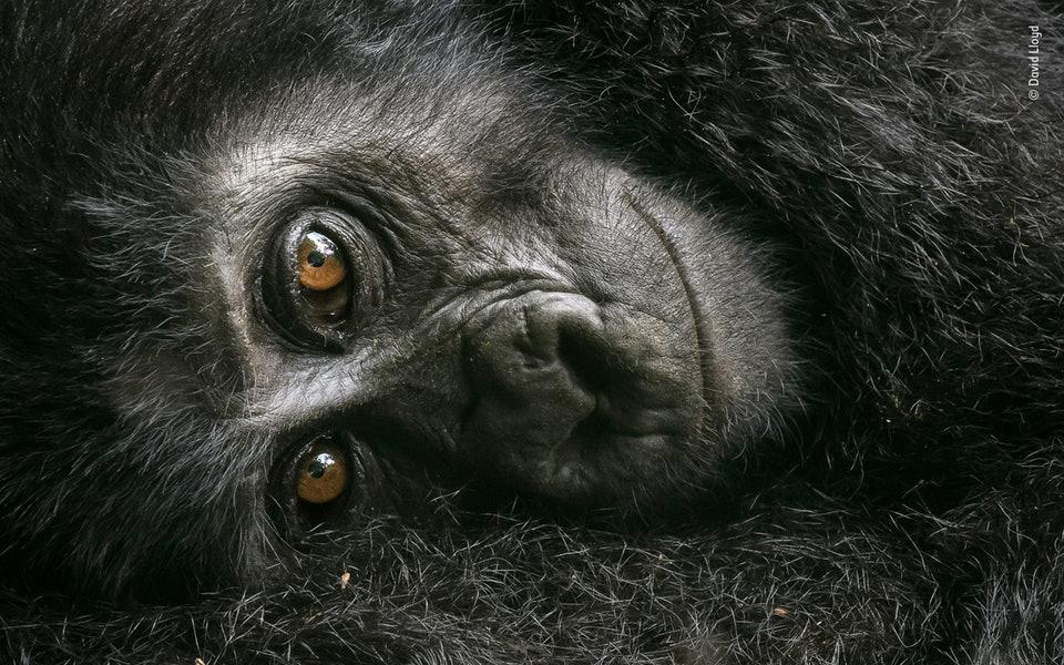 24張「大自然跟人類只能留下一個」的震撼照 最終北極熊成為雪白的悲歌!
