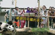 馬來西亞「貓熊球案」 政府養不起「貓熊整家人被退回中國」...網酸:人都養不活,還養動物?