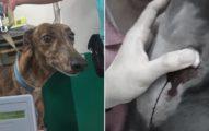 國泰動物醫院養25隻血犬「抽到貧血軟腳」 狂戳4針到噴血「一袋賣3萬5」只罰26萬!