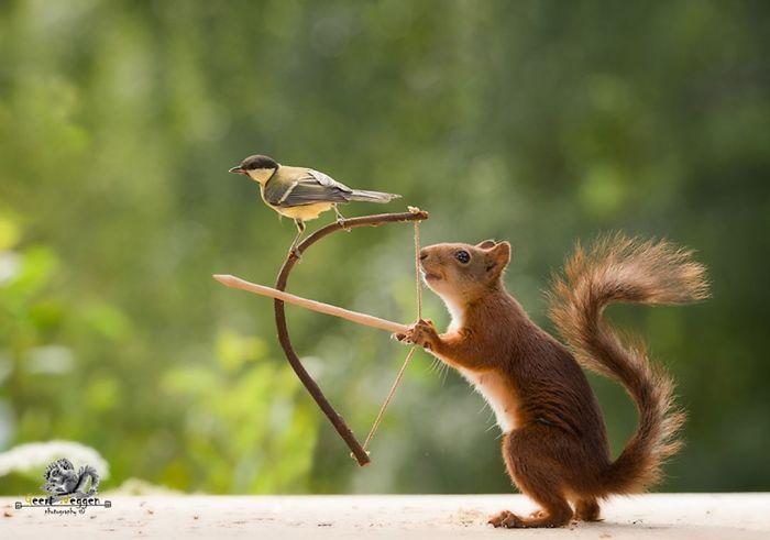 20張萌照告訴你「松鼠的24小時都在幹嘛」 跟同伴玩蹺蹺板的瞬間太療癒啦❤