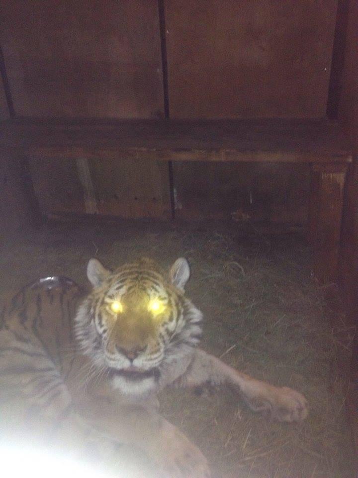 家門莫名打不開 才要衝刺卻聽見低吼聲…門縫偷看「母老虎眼神掃過」讓他嚇尿報警!