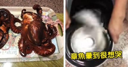 煮章魚之前要先丟進洗衣機打45分鐘 達人改用「這台」讓人笑瘋:章魚暈到藍受香菇