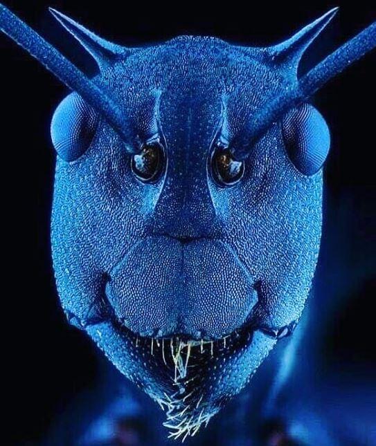 20個「日常物品在顯微鏡底下」的驚奇模樣 喜歡草莓的最好還是別看了!