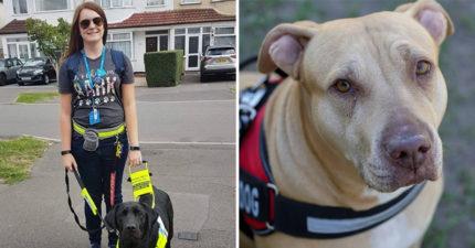她帶導盲黑狗兄上車 竟遭大媽咆哮「導盲犬只有黃色」怒斥騙子:他X的狗給我下車!