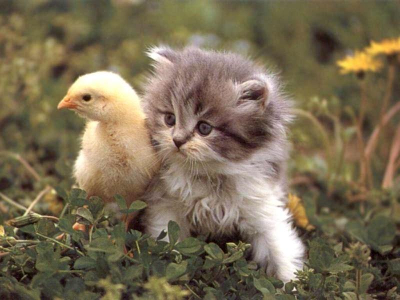 看到超可愛動物「就想捏捏看」!大腦「保護機制」開關作祟 專家:每個人都會這樣