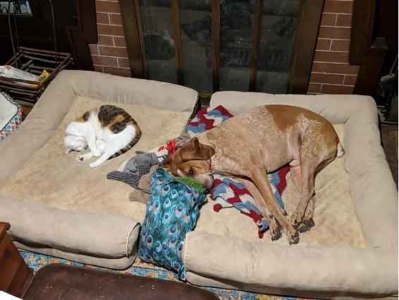 15張「大家都是一家人」的貓狗超和平相處照 躲在煞氣a爸爸後面絕對安全!