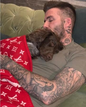 投胎真的要看清楚!貝克漢熟睡被偷拍 網友眼裡卻只有「狗蓋的毯子」:那條要18萬...