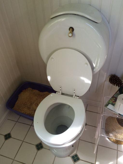 朋友娶嫩妻他嗆「有錢辦婚禮沒錢還?」 把對方化身「200小塊」送馬桶...30kg碎肉堵水管!