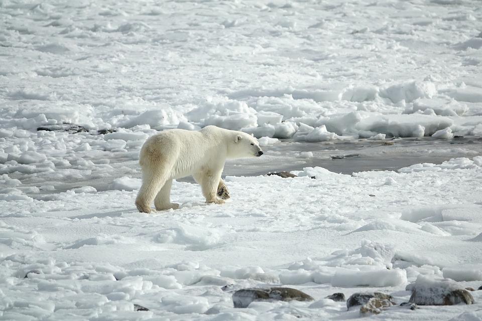 龍婆預言真的來了!北極發現無藥可醫「超級細菌」 預計每年帶走千萬條人命