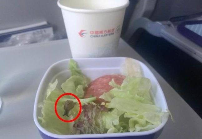 她吃飛機餐開心打開沙拉 卻驚見「整盆根本森林生態圈」小蝸牛還在高空奮力求生!