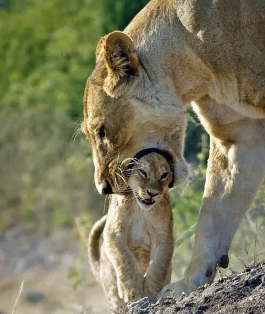 馬麻放開我啦!7張「母愛噴發但小寶寶卻超厭世」的爆笑動物育兒照
