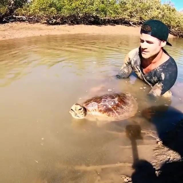海龜受困陸地快被曬成乾...他忍住手痛「抱起超燙龜殼」往水源地狂奔 網友:結局太催淚QQ