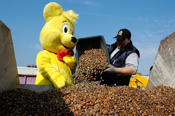 80年來請松鼠吃寒冬愛心餐!去HARIBO總部用橡實、栗子就能換「一年份小熊軟糖」❤