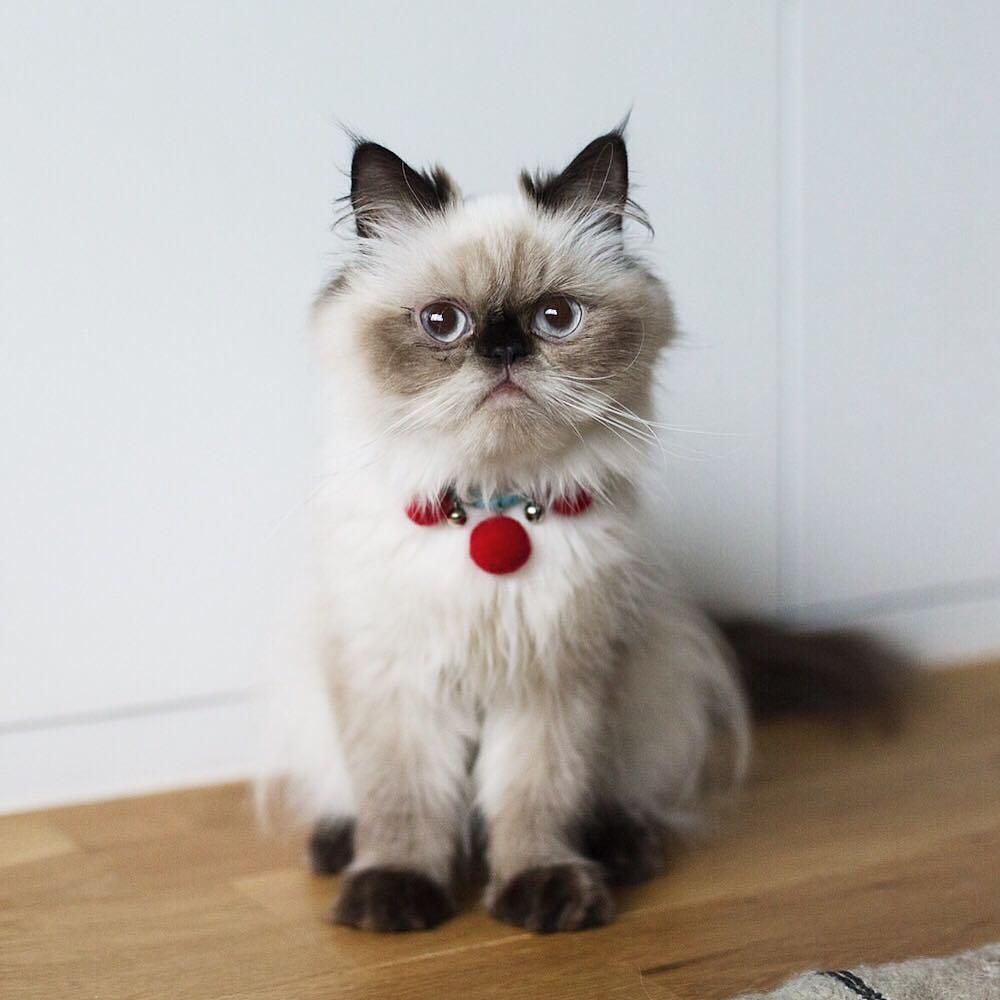 20張「確定貓咪長得比人類可愛」的萌x1000照 就算陰陽眼照樣讓奴才乖乖掏魚泥伺候❤