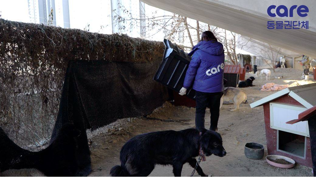 知名動保組織代表被爆「救狗是想騙捐款」 為了收容更多...直接把救來的狗打一針安樂!