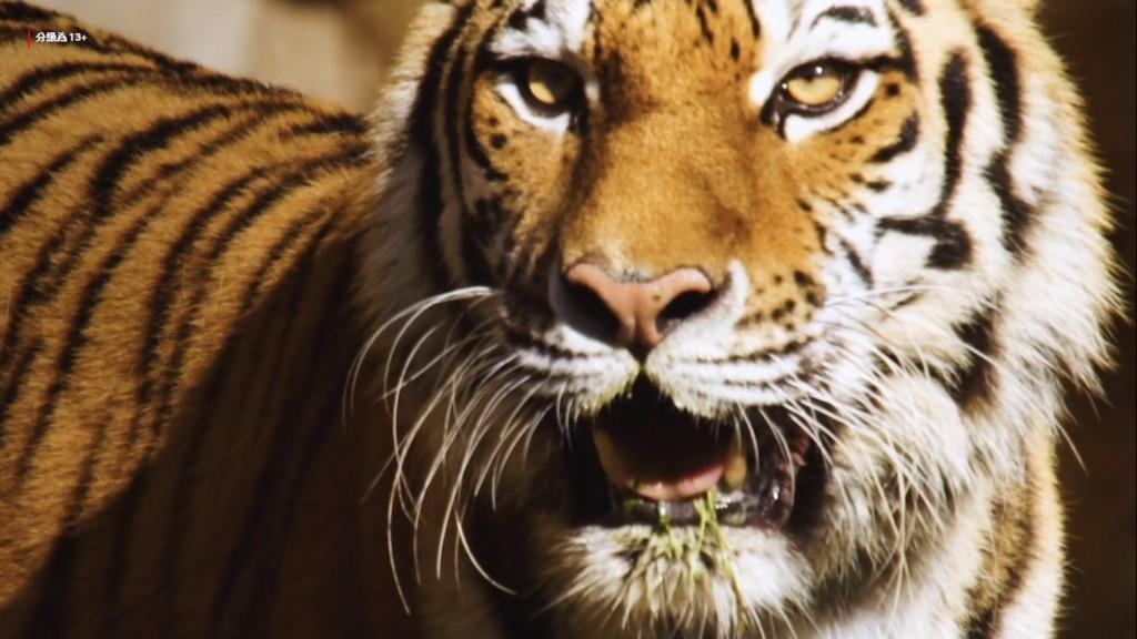 「這輩子最好別遇上」的10種亞洲生物!冠軍沒血沒腦...看到「24隻眼睛」就拿到天堂門票