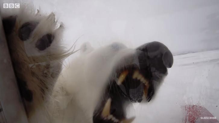 攝影師不小心流露恐懼的氣味...北極熊逮到直接狠咬「生命的最後防線」:人類該還債了!