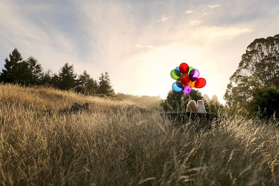 世界最萌博美Boo「10年歲月劃下句點」 睡醒就沒有心跳了...主人貼文震驚15萬粉絲