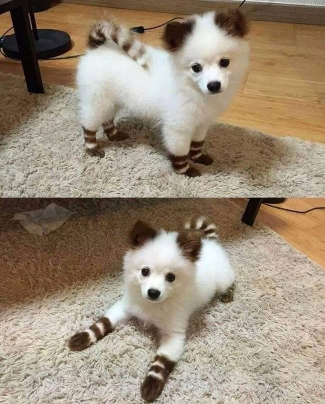 20張「把惡運通通趕走」的動物最傻萌一面 終於撿到雪球的狗狗!