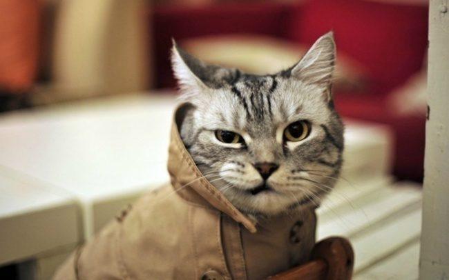 16張照片告訴你「為什麽人生中必養一隻貓」 心情好的時候會變成兔子❤