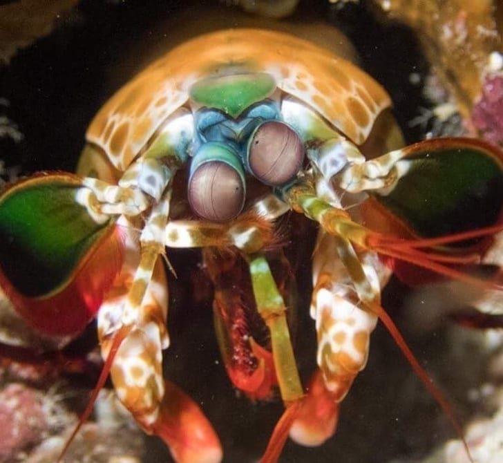 30種你一輩子也不可能遇到「根本是稀有寶可夢」的罕見動物 海神海蛞蝓就如名字一樣霸氣!
