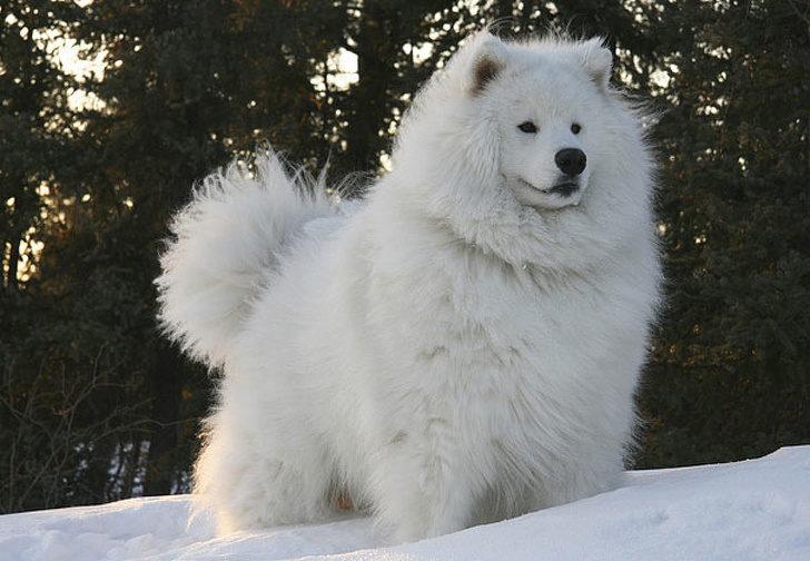 21隻「能讓你有力量再撐1天到星期五」的可愛動物們 牠到底是狗還是熊?