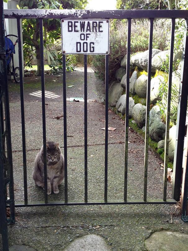20張圖文嚴重不符的「內有惡犬」0威嚇作用照 還混了不是狗的怪東西進去!