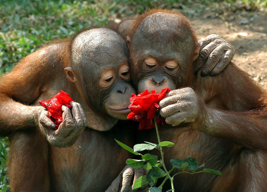 25張動物「用心靈感受花香」的可愛暖照 超萌蜥蝪也跟著一起吸!
