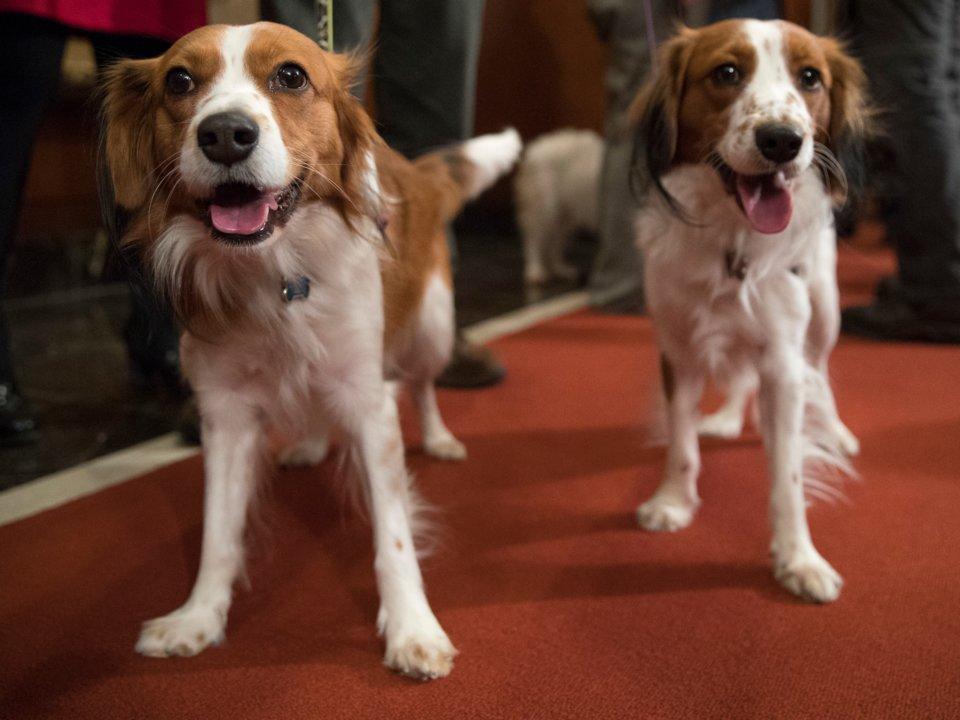 出現在「畫裡的2隻神犬」被人類成功創造 「名字」比普丁還有威嚴外表卻超呆!