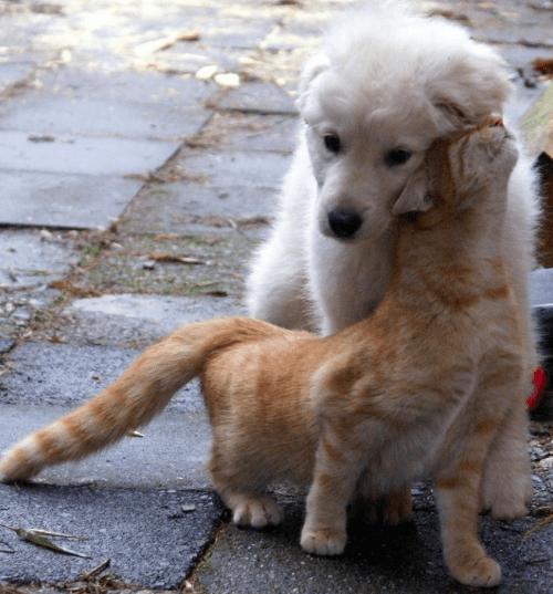 15個趁人類不注意偷偷放閃「愛上了狗狗的喵星人」 小貓咪睡在大狗狗身上畫面太美好❤