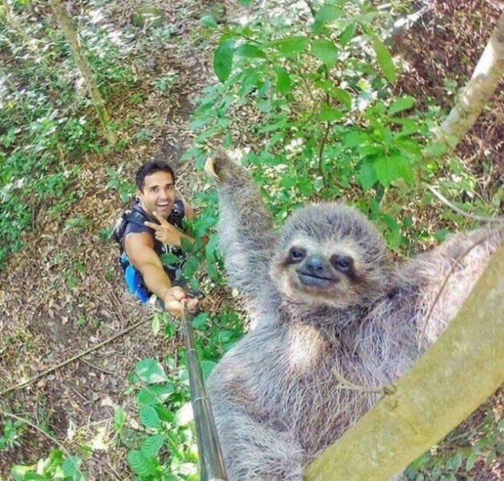 20張「一生一定要拚一次」的超狂自拍 貓熊啃竹子還偷偷瞄鏡頭太萌❤