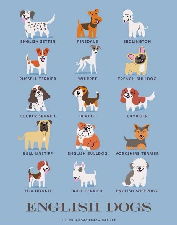 15張可愛列表告訴你「你們家毛孩的家鄉來自哪裡」 德國犬看起來都超萌♥
