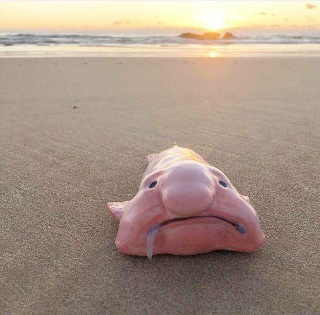 23隻「一生最多只能看到一次」的超神奇動物 粉紅胖胖魚有巫婆的大鼻子!