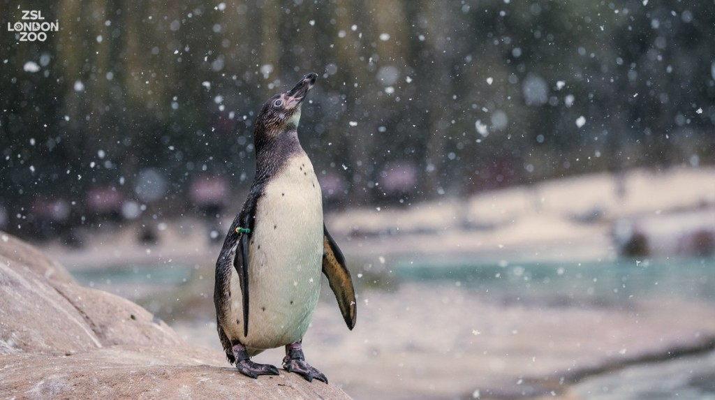 22張「讓你希望一年四季都是冬天」的動物搞笑玩雪瞬間❤