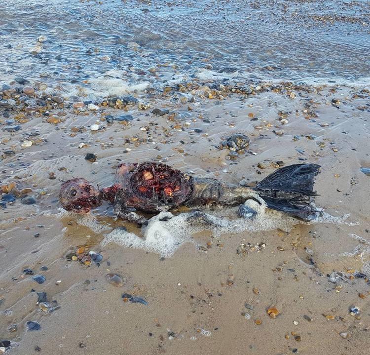 有影片/他海灘散步「驚遇詭異物品」 人類身體卻接著完整魚尾...風一吹還會擺動!