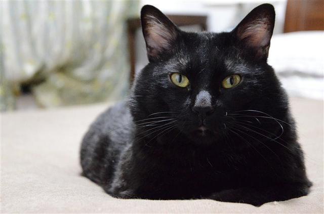 貓咪走丟10年主人哭到沒眼淚 接到神秘電話去領養才知道「都生活在離家400公尺的鄰居家」