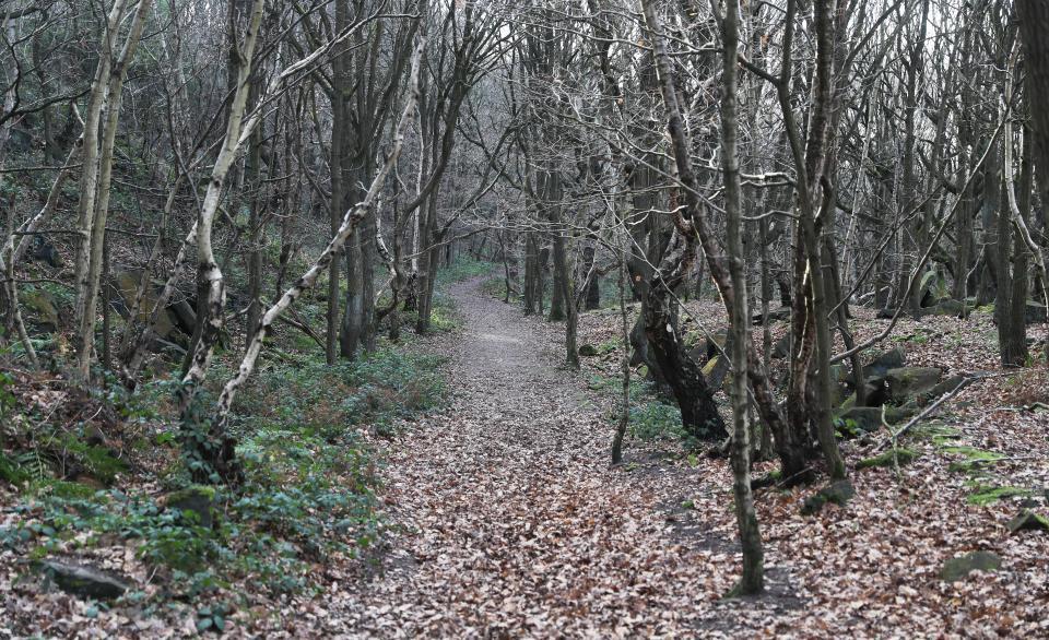 連狗都看不下去...她森林散步聽見詭異咒語聲 驚見「男女進行受孕儀式」完成後還必須見紅