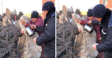 丟臉片/貓王大冬天耍酷到外面噓噓 竟「整隻凍成活體標本」卡石頭上...最後靠一壺溫水救駕XD
