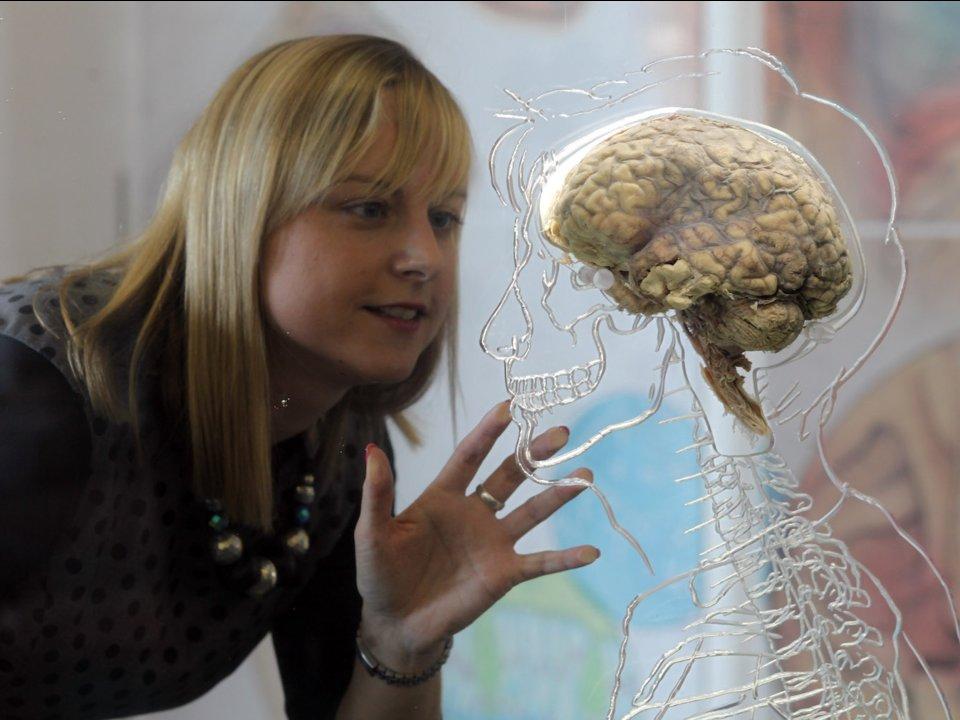 10個證明「老師的話都是錯的」大腦迷思 40歲以後才是真正的走下坡!