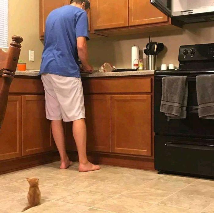 25張證明「貓咪絕對少了一根筋」的爆笑照片 第一次看小嬰兒...驚恐到站起來了!